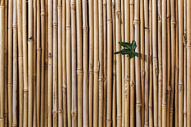 suchý bambus