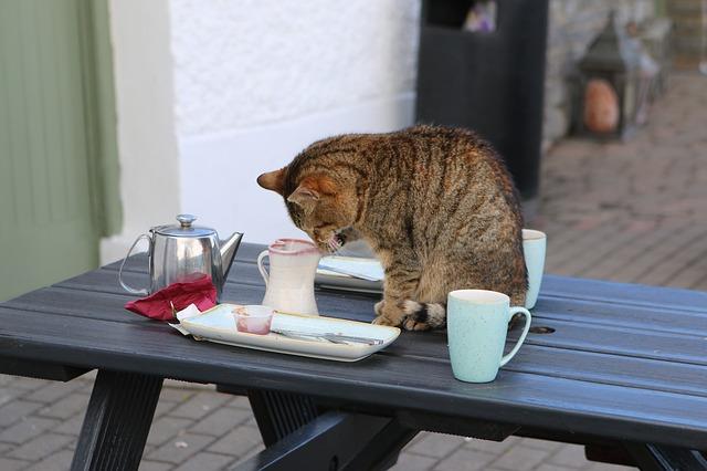 kočka na stole