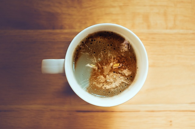 kočka na kávě